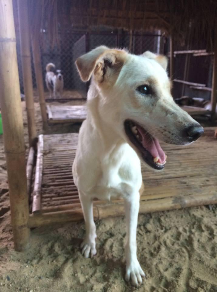 dog_shelter_korat