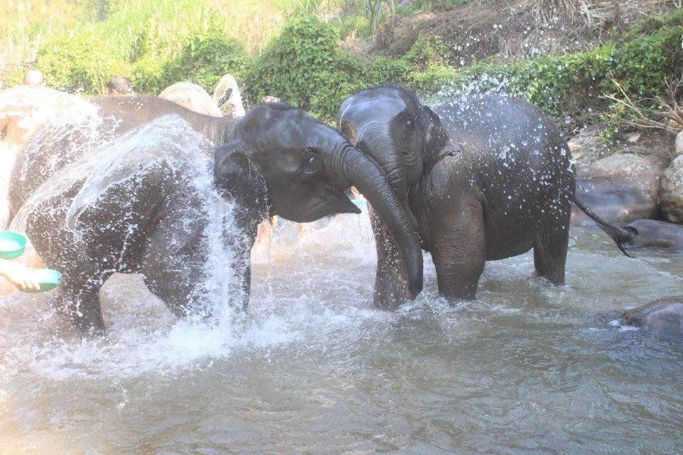 elephants_river.jpg