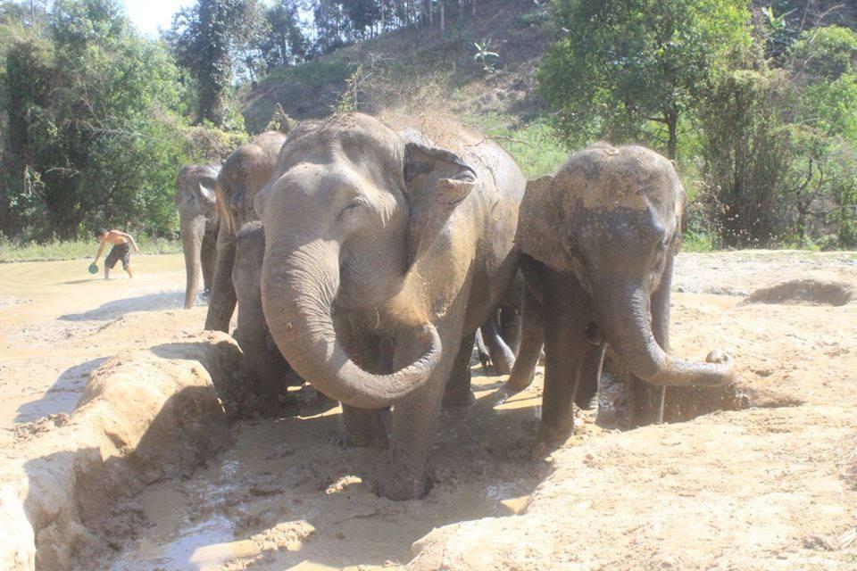 elephants_mud.jpg